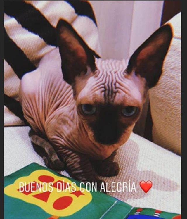 El gato de la compañera de Cristiano Ronaldo presentado en Instagram