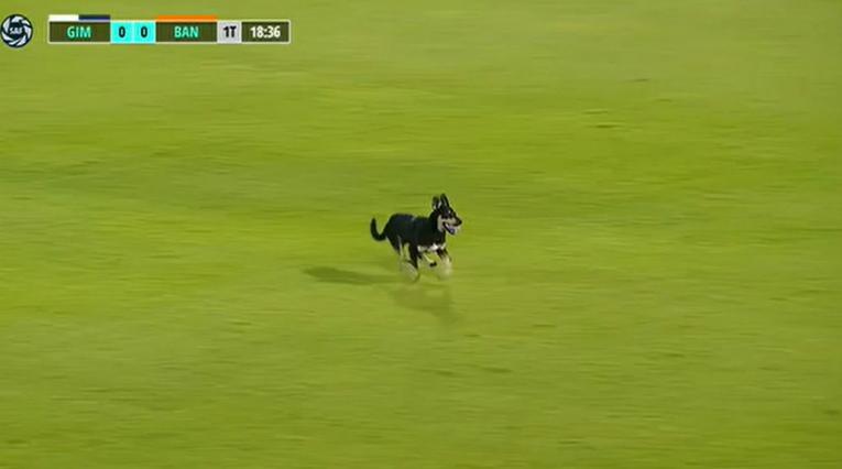 Perrito en Argentina